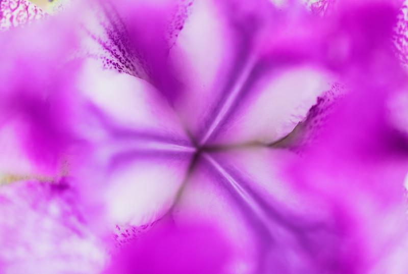 Flowers 5-5 3.jpg