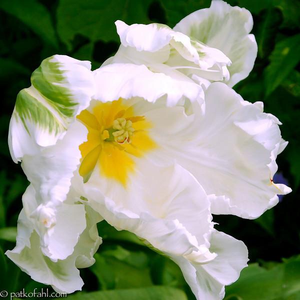 White_and_Yellow_1__MG_9771.jpg
