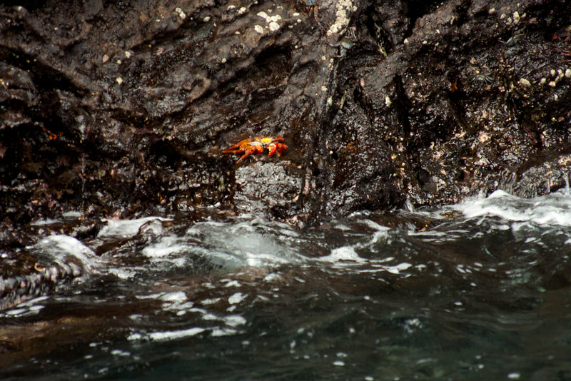 Crashing Waves on the Rock : Journey into Genovesa Island in the Galapagos Archipelago
