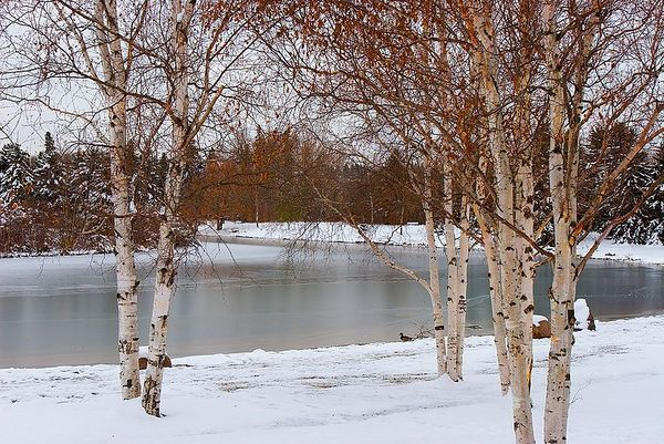 Early Winter Shots in Hawerlak Park