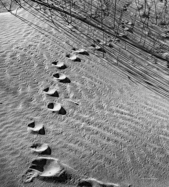 Old foot prints in the sand