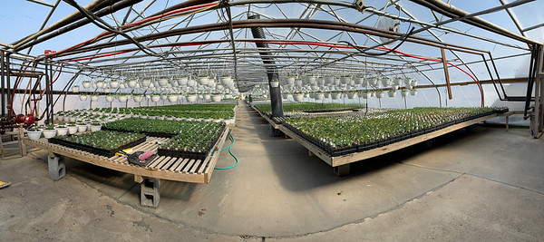 March Greenhouses