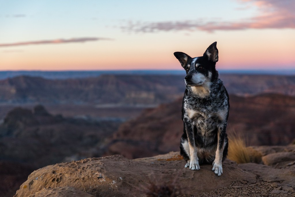 How to Travel with a Dog: The Ultimate Guide to Travelling Abroad With a Dog