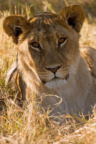 Lionesse4.jpg