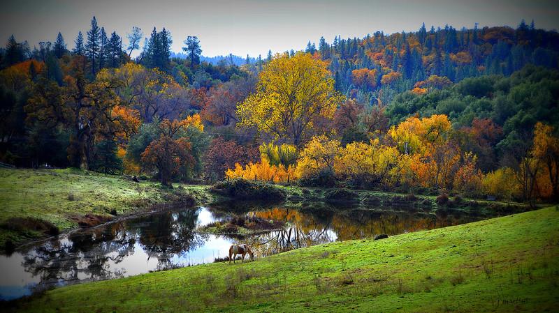 running m pasture 12-10-2012.jpg