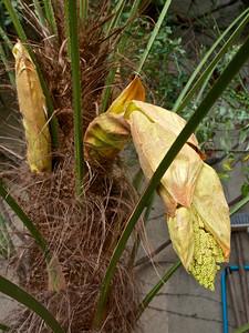 Le palmier de Jacky