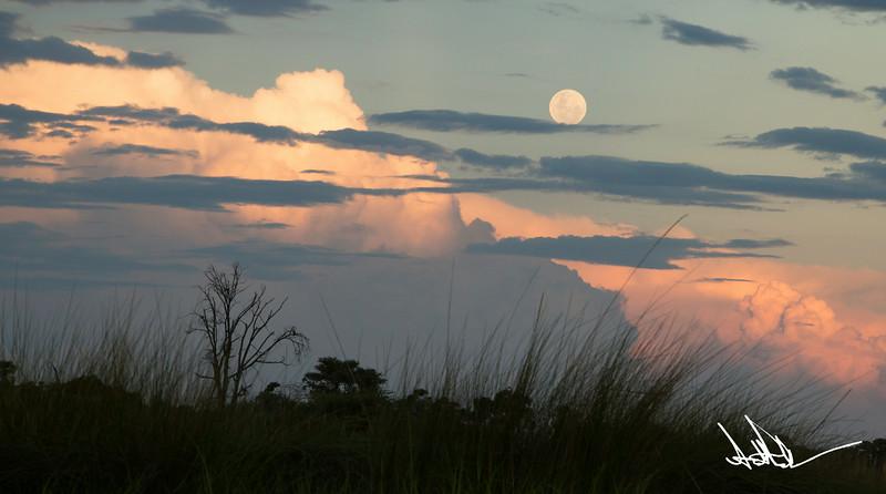 Botswana LandscapeS-13.jpg