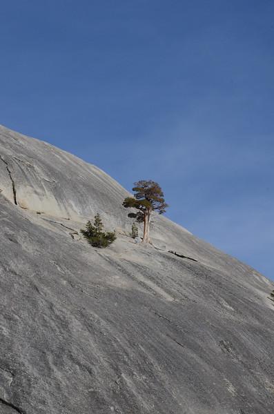 Sierra5.jpg