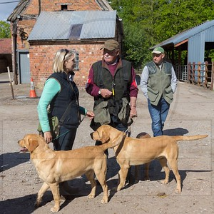 SHROPSHIRE GUNDOG SOCIETY - AV RETRIEVER WORKING TEST - CODSALL