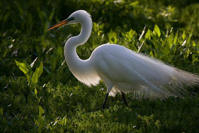 Audubon Swamp Garden 4-11-08