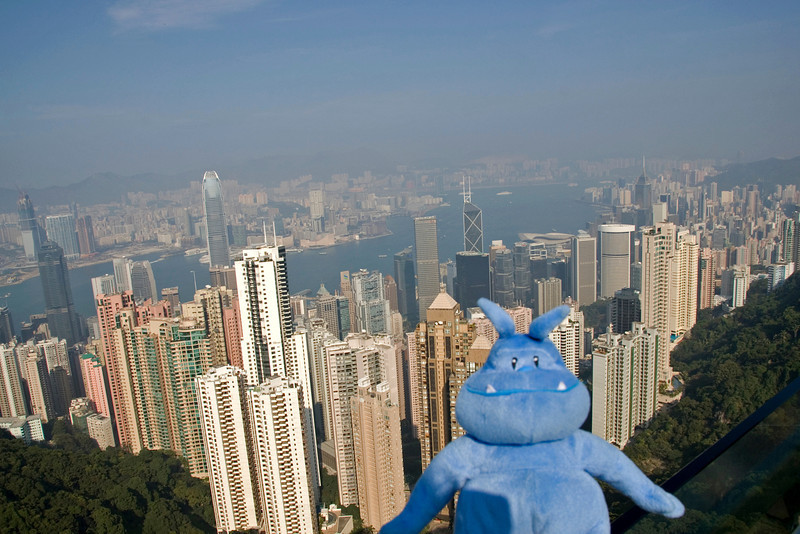 Skull posing with Hong Kong skyline in the background from Victoria Peak