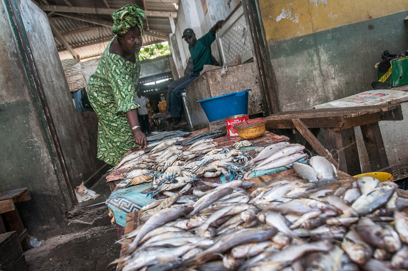 Fish for sale in a market in Banjul, Gambia