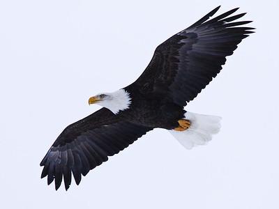 Eagle Feed 11-30-08