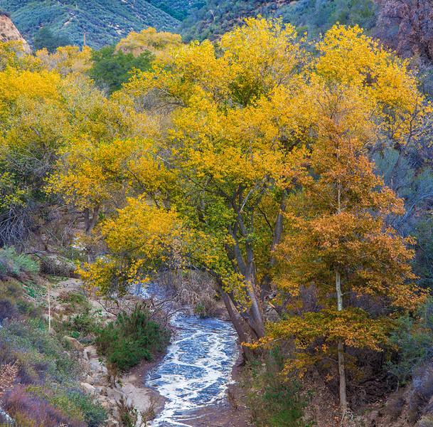 Sierra_Pelona_Mountains_Fall_Color_Southern_California_Square_7693.jpg