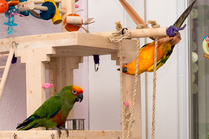 Looks like they found the treats in their play gym!