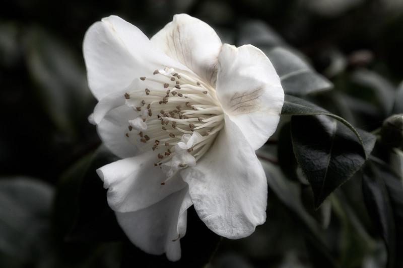 mar 16 - flower petals.jpg