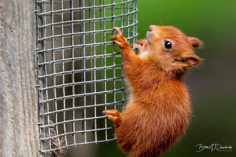 British Wildlife Centre_Z6-7337.jpg