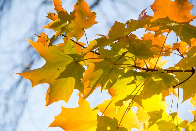 Late Fall Color-1.jpg