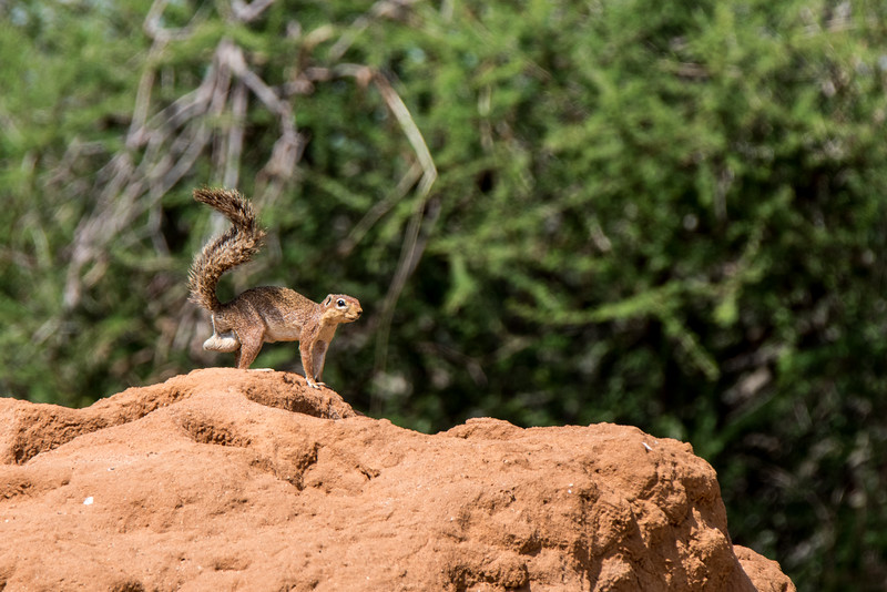 Samburu (47 of 70).jpg