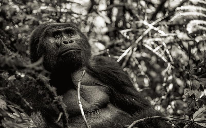 Uganda_T_Gor-432.jpg