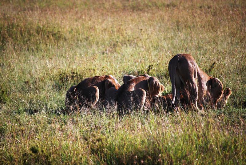 Serengeti (98).JPG