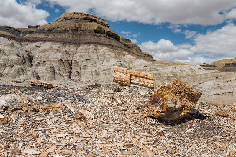 Petrified wood