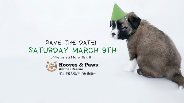 HOOVES & PAWS PUPPIES 2-7-19