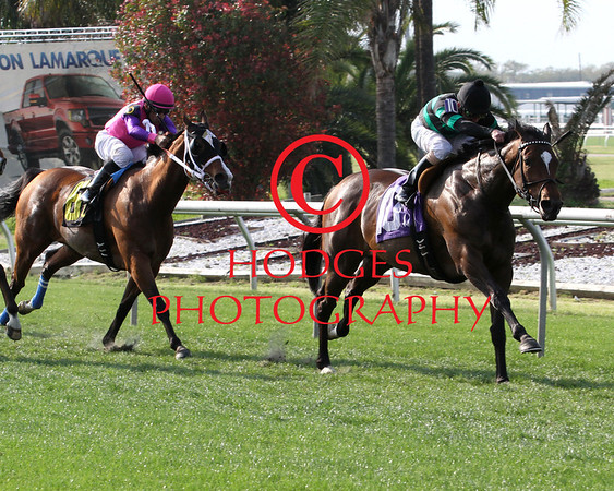 Red Camelia Stakes