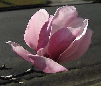 Magnolia test