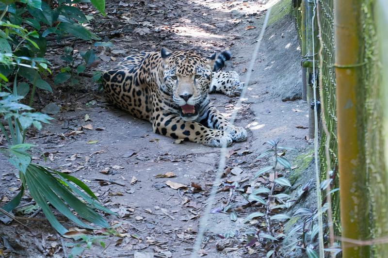 Zoo _DSC8173.jpg