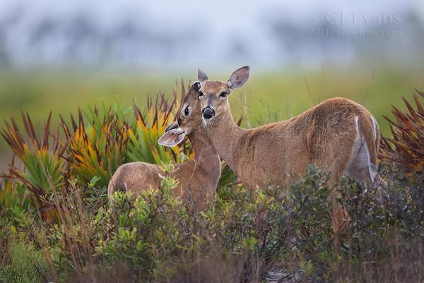 Florida Scenery, Flora & Fauna
