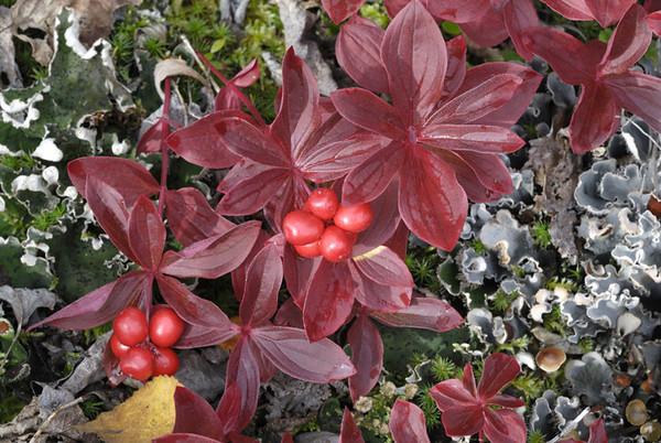 Flora and Foliage