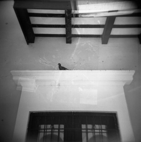04_bird.jpg