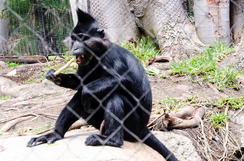 Vacation 2016 - San Diego Zoo