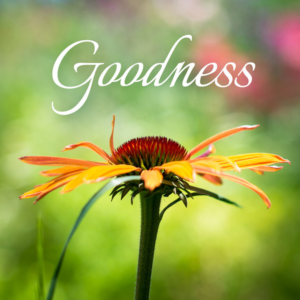 48_Galatians5-22-23_NJ_Fruit of the Spirit_4-23-17_6-Goodness.jpg