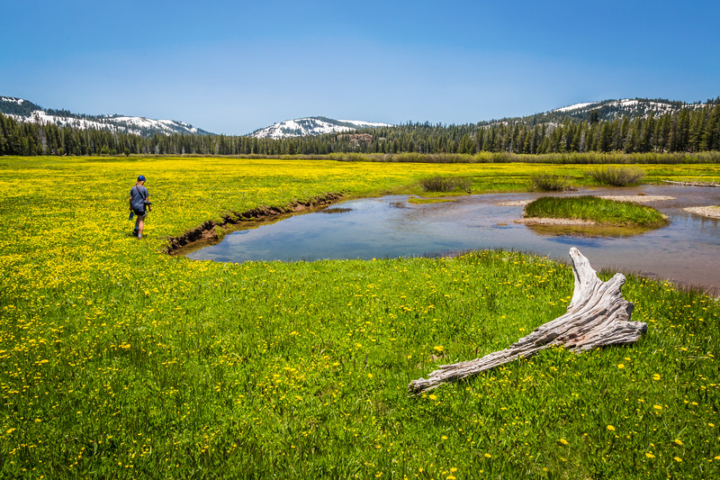 Lacey Meadows - Truckee