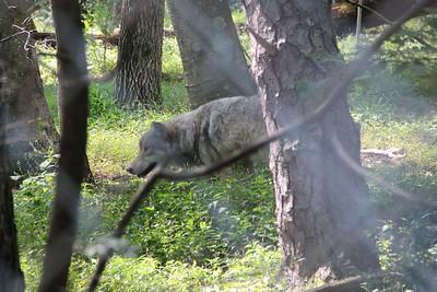 Lakota Wolf Preserve 7-18-15