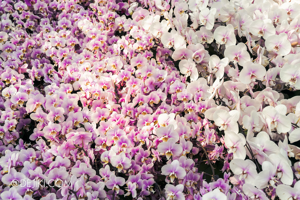 Gardens by the Bay Flower Dome - Orchid Extravaganza Floral Display 2017 / White gradient