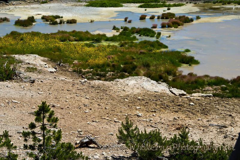 20100713_Yellowstone_2716.jpg