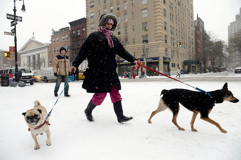 . A woman walks two dogs along Sixth Avenue during a snow storm in New York City, New York, USA, 21 January 2014. Snow and sub-zero temperatures continue to be forecast in the region, according to weather reports.  EPA/ANDREW GOMBERT