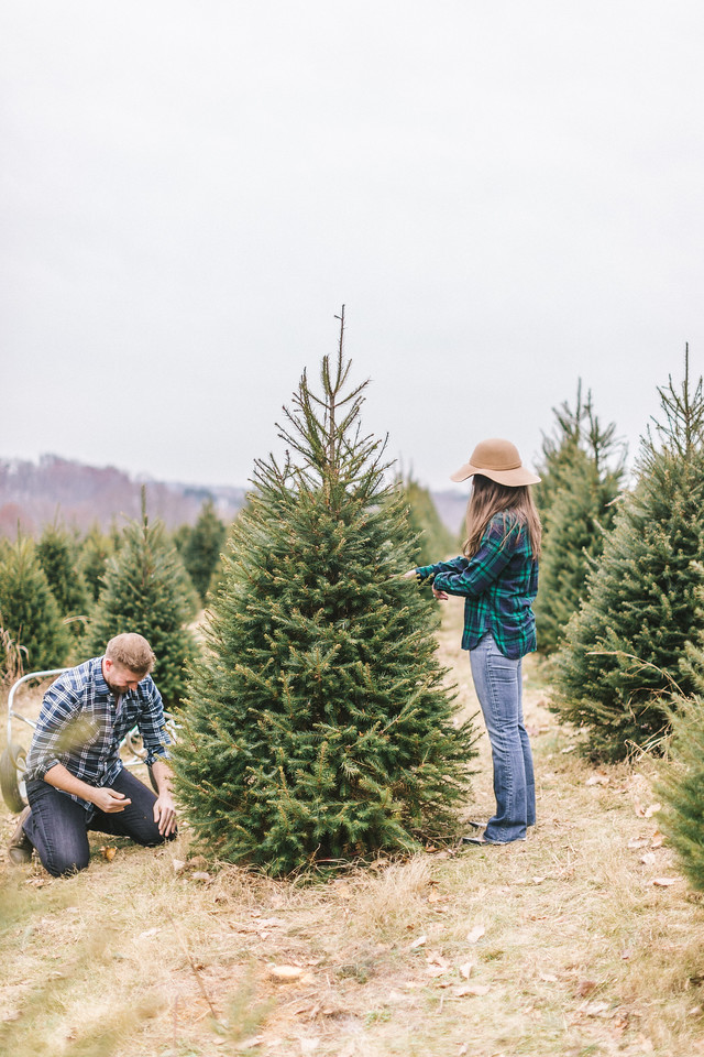 Lizzie and Craig's Christmas tree engagement shoot at Graver Farm. Craig is cutting down the tree.