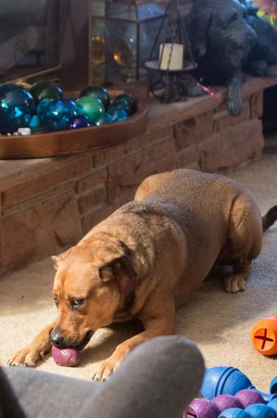 20161125-Dogs snacking-PMG_4762.jpg