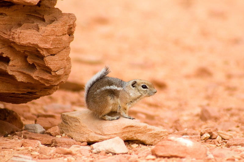 Cly spied this little chipmunk near the White Domes area in the park.