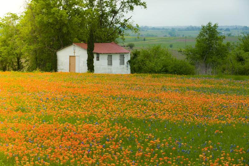 2015_4_3 Texas Wildflowers-7642.jpg