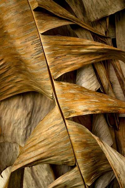 Brown dried leaf banana lauren master p p .jpg