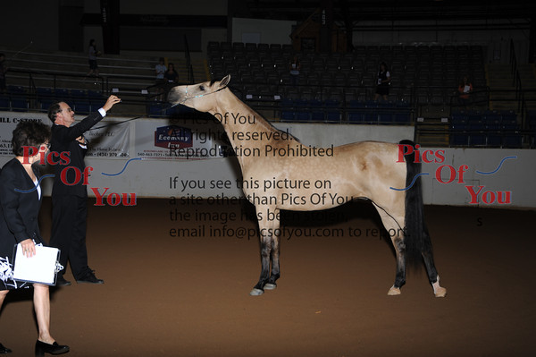 Shenandoah Valley Arabian Classic (SVAC) 2011