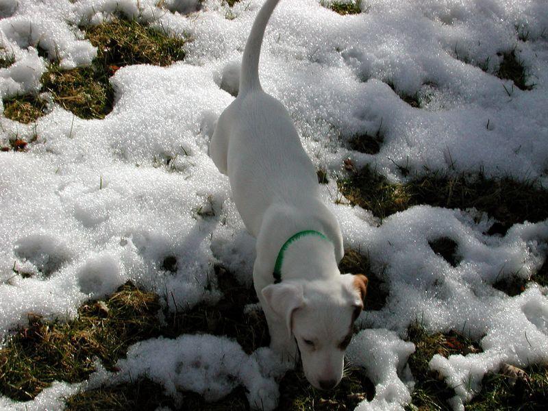 Feb 05- Puppies 004_edited.jpg