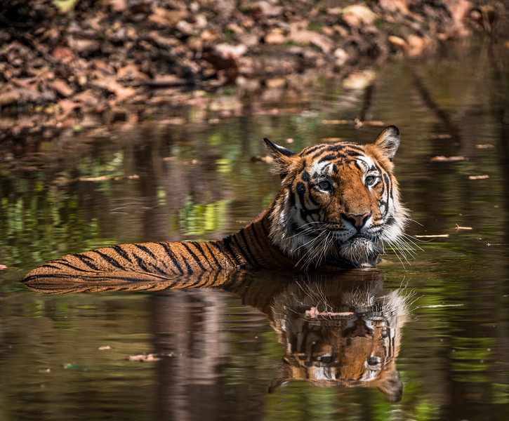 India_April_2019-1199.jpg