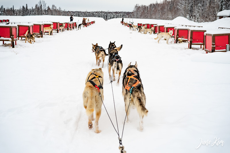 Alaska Helicopter Tours Winter Dog Sledding  Feb 24, 2021