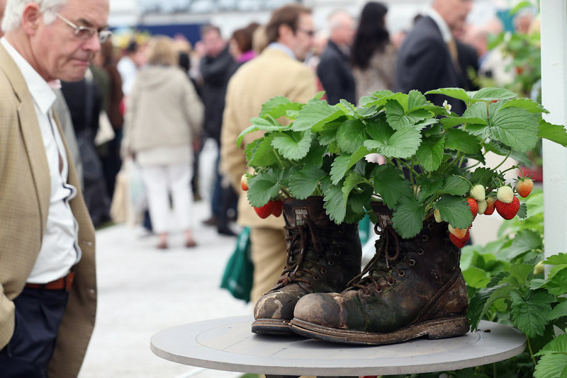 . Strawberries are grown in a pair of old boots on the Ken Muir stand in The Great Pavilion at the RHS Chelsea Flower Show on May 21, 2013 in London, England. The Chelsea Flower Show run by the RHS celebrates its 100th birthday this year.  (Photo by Oli Scarff/Getty Images)